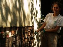 Annabell repairing a cob wall
